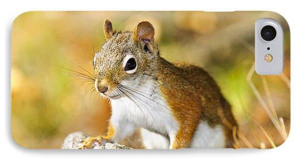 Cute Red Squirrel Closeup IPhone Case by Elena Elisseeva