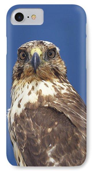 Galapagos Hawk Buteo Galapagoensis Phone Case by Tui De Roy