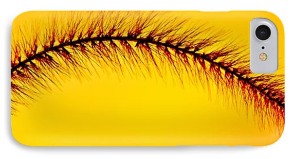 Giant Foxtail In Gold Phone Case by Jim Finch