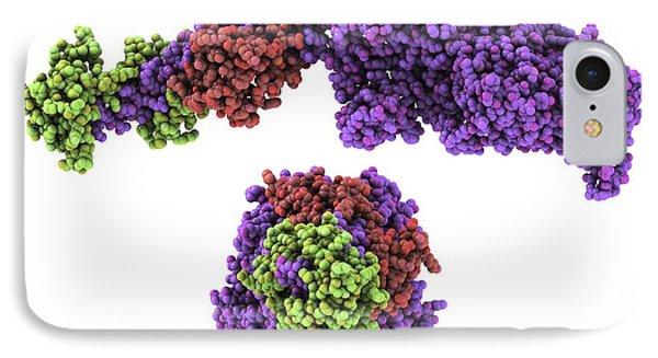 Molecular Motor Protein IPhone Case by Laguna Design