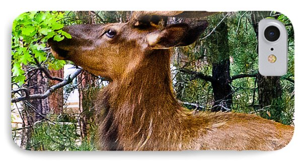 Browsing Elk In The Grand Canyon Phone Case by Bob and Nadine Johnston