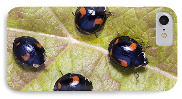 Harlequin Ladybirds Phone Case by Sheila Terry