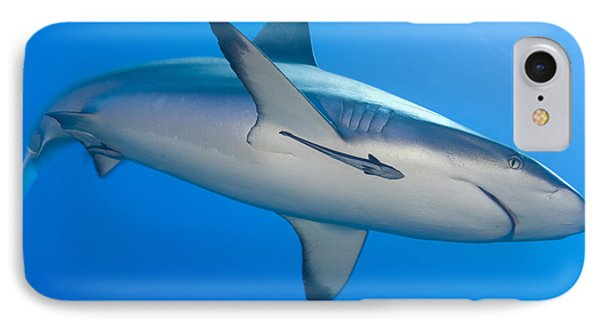 Gray Reef Shark With Remora, Papua New Phone Case by Steve Jones