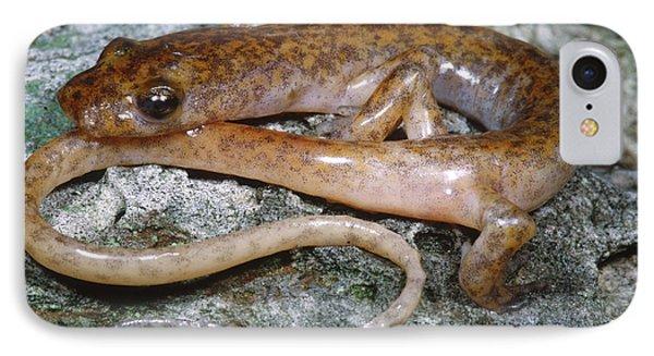 Cave Salamander IPhone 7 Case by Dante Fenolio