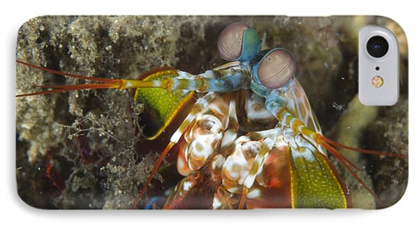 Close-up View Of A Mantis Shrimp, Papua Phone Case by Steve Jones