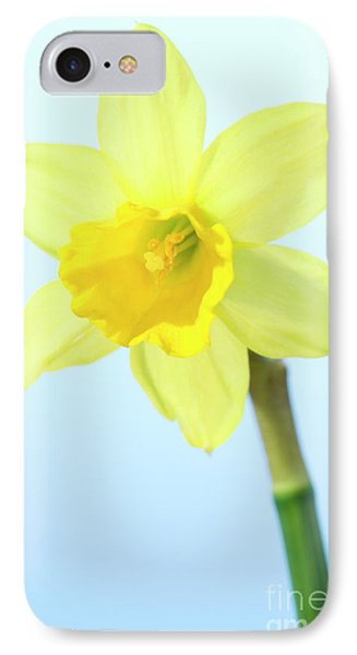 Daffodil (narcissus Sp.) Phone Case by Lawrence Lawry