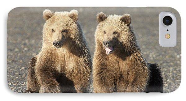 Grizzly Bear Ursus Arctos Horribilis Phone Case by Matthias Breiter