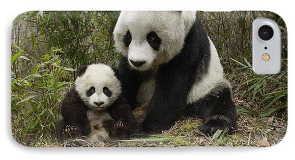 Giant Panda Ailuropoda Melanoleuca Phone Case by Katherine Feng