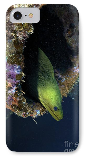 A Large Green Moray Eel Phone Case by Terry Moore