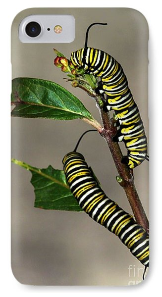 A Pair Of Monarch Caterpillars Phone Case by Sabrina L Ryan