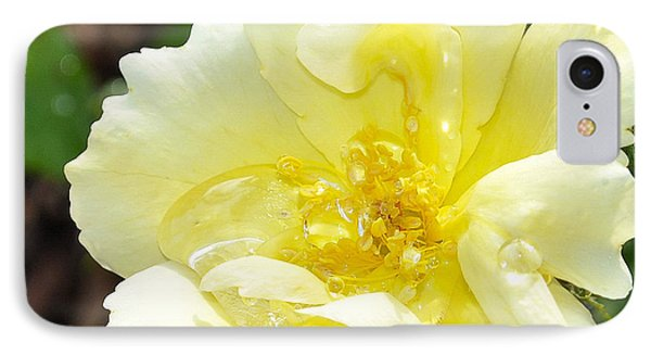 A Rose Is A Rose Rrp IPhone Case by Jim Brage