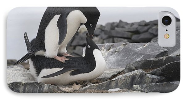 Adelie Penguins Mating  Antarctica Phone Case by Flip Nicklin