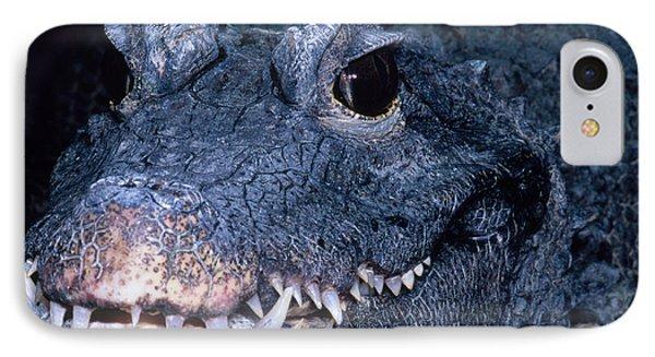 African Dwarf Crocodile IPhone Case by Dante Fenolio