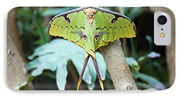 African Moon Moth 1 IPhone Case by Andee Design