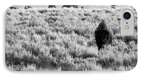 American Bison In Black And White IPhone Case by Sebastian Musial