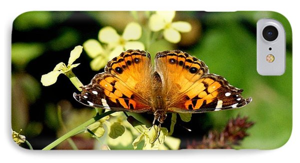 American Painted Lady I Phone Case by Bruce W Krucke