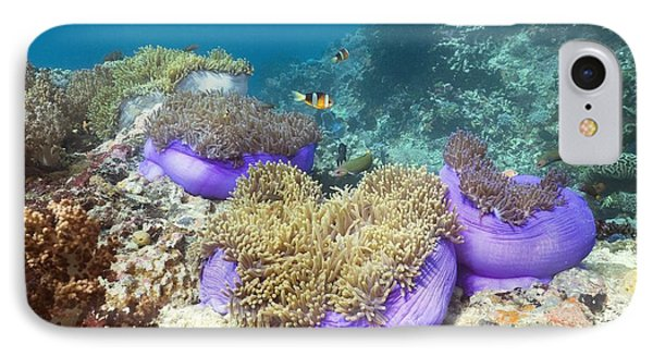 Anemones With Anemonefish Phone Case by Georgette Douwma
