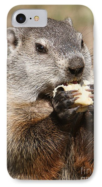 Animal - Woodchuck - Eating IPhone Case by Paul Ward