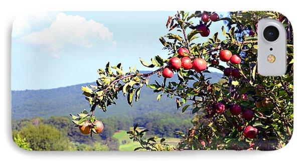Apples On A Tree Phone Case by Susan Leggett