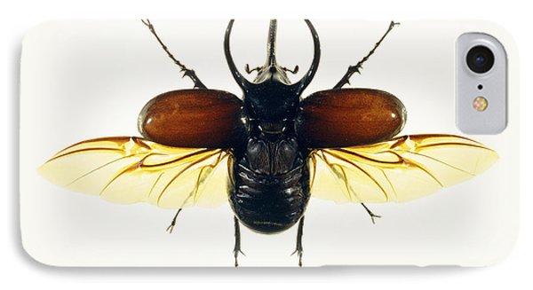 Atlas Beetle Phone Case by Lawrence Lawry