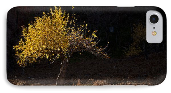Autumn Light IPhone Case by Mike  Dawson