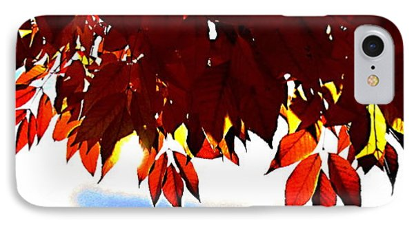 Autumn Sun Glory Phone Case by Danielle  Parent