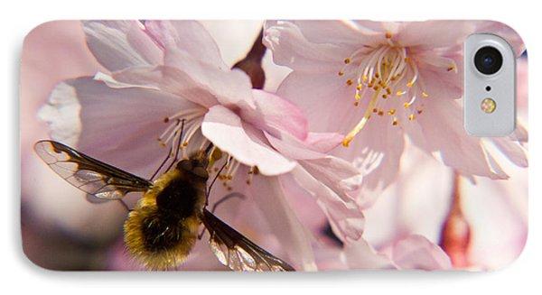 Bee Fly Feeding 6 Phone Case by Douglas Barnett