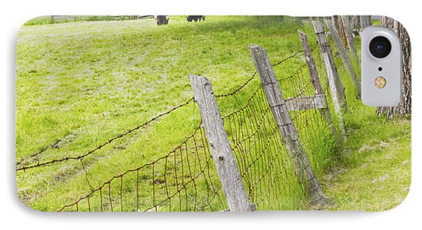 Belted Galloway Cows Farm Rockport Maine IPhone Case by Keith Webber Jr