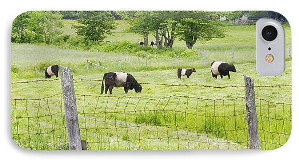 Belted Galloway Cows On  Farm Rockport Maine Photo IPhone Case by Keith Webber Jr