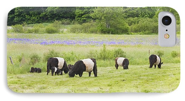 Belted Galloway Cows Pasture Rockport Maine Photograph IPhone Case by Keith Webber Jr