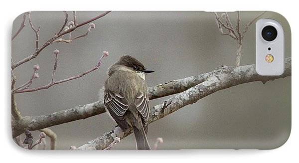 Bird - Eastern Phoebe - Very Contented Phone Case by Travis Truelove