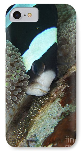 Black And White Anemone Fish Looking Phone Case by Mathieu Meur