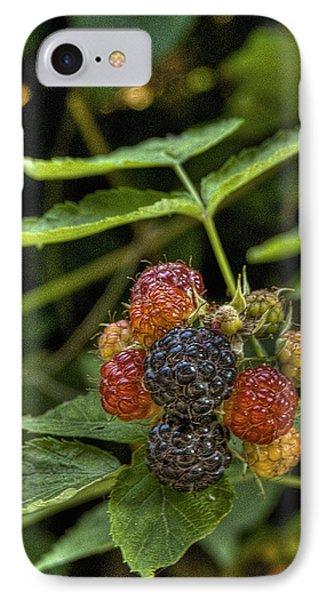 Black Raspberry Dream Phone Case by William Fields