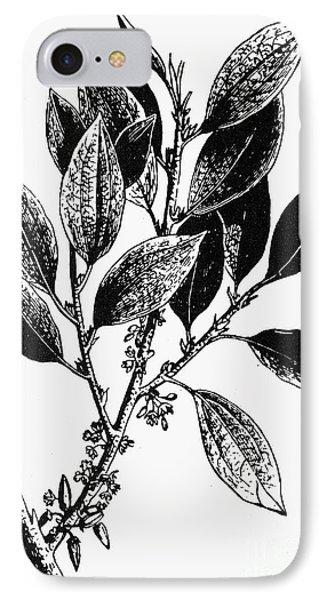 Botany: Coca Shrub Phone Case by Granger