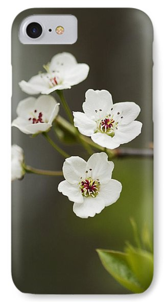 Bradford Callery Pear Tree Blossoms - Pyrus Calleryana Phone Case by Kathy Clark