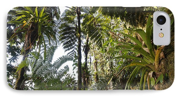 Bromeliad And Tree Ferns  Phone Case by Cyril Ruoso