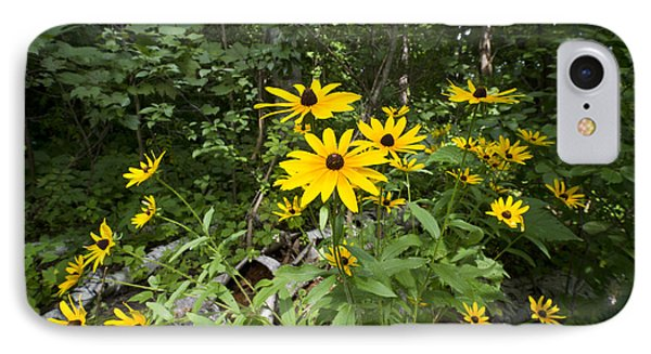 Brown-eyed Susan In The Woods Phone Case by Gary Eason