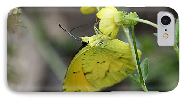 Butterfly - Yellow Sulphur On Yellow Phone Case by Travis Truelove