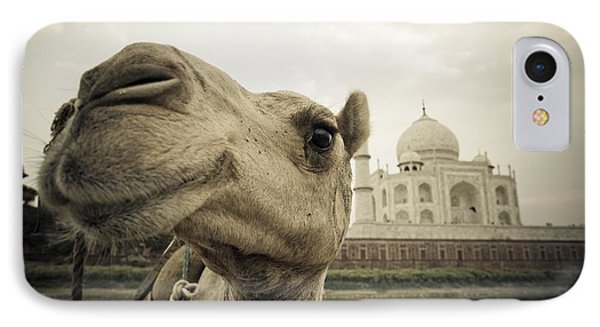 Camel In Front Of The Yamuna River And Phone Case by David DuChemin