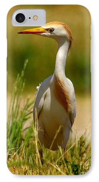 Cattle Egret With Closed Eyelid Phone Case by Robert Frederick