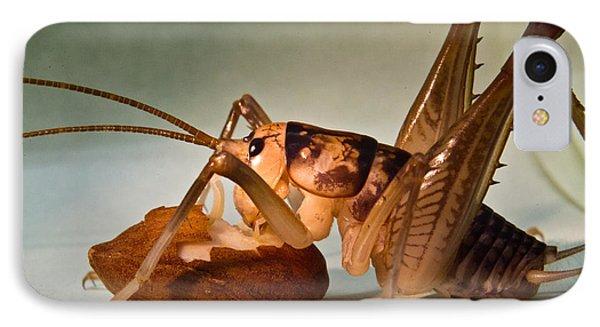 Cave Cricket Feeding On Almond Phone Case by Douglas Barnett