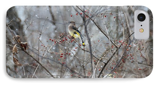 Cedar Wax Wing 3 IPhone 7 Case by David Arment
