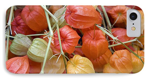 Chinese Lantern Flowers IPhone Case by Jane Rix