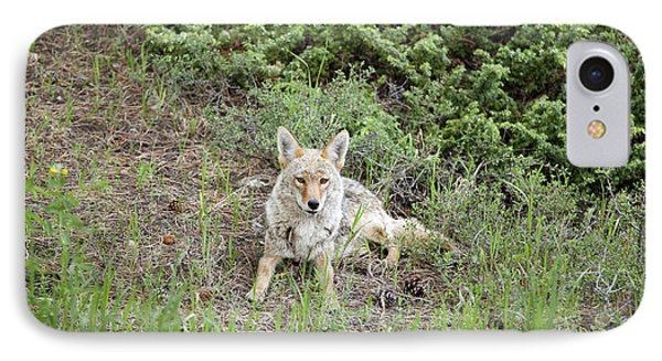 Colorado Coyote Phone Case by Jenna Szerlag