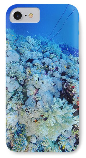Coral Reef Phone Case by Alexis Rosenfeld