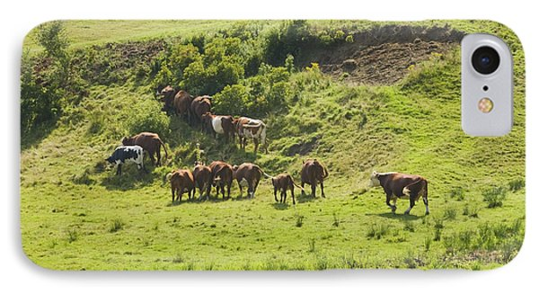 Cows Grazing On Grass In Farm Field Summer Maine IPhone Case by Keith Webber Jr