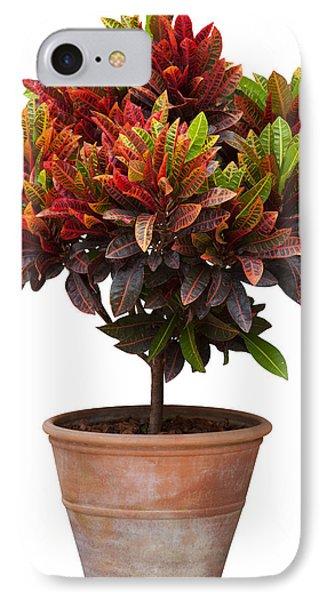 Croton Tree In Flowerpot Phone Case by Atiketta Sangasaeng