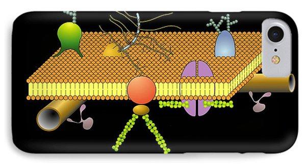 Cytoskeleton And Membrane, Artwork IPhone Case by Francis Leroy, Biocosmos