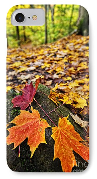 Fall Leaves In Forest Phone Case by Elena Elisseeva
