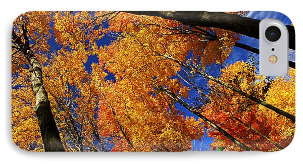 Fall Maple Treetops Phone Case by Elena Elisseeva